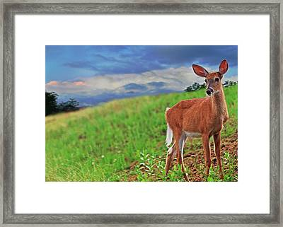 Fawn Framed Print by Everet Regal