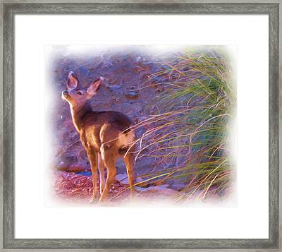 Fawn In Last Light Framed Print by FeVa  Fotos