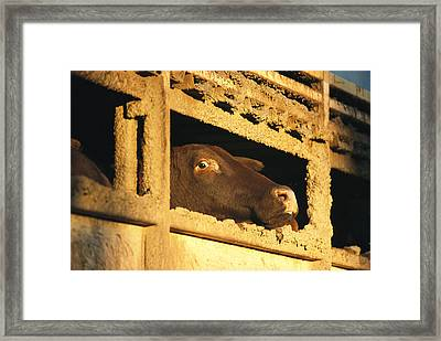 Fear In The Eyes Of A Santa Gertruti Framed Print by Jason Edwards