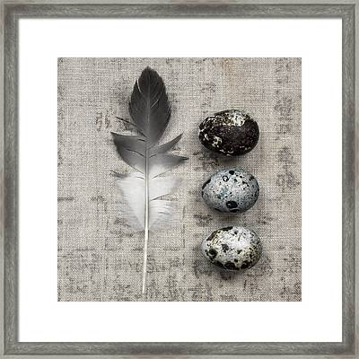 Feather And Three Eggs Framed Print by Carol Leigh