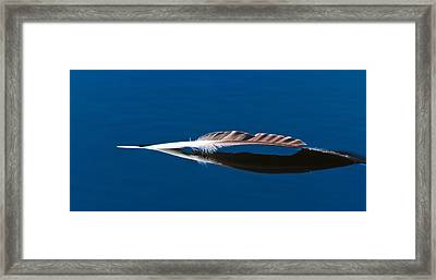 Feather Framed Print by Mitch Shindelbower