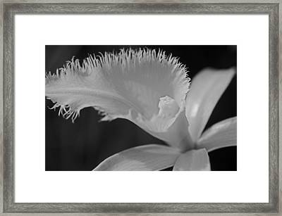Feather Petal Of White Framed Print by Cheryl Cencich