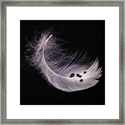 Feather With Blood Framed Print by Joana Kruse