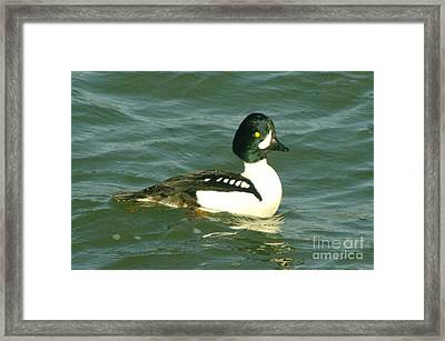 Feeling Ducky  Framed Print by Jeff Swan