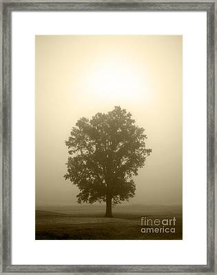 Feeling Small 2 Framed Print by Amanda Barcon