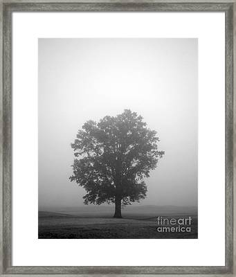 Feeling Small Framed Print by Amanda Barcon