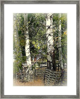 Fenced Aspen Framed Print by Cindy Wright