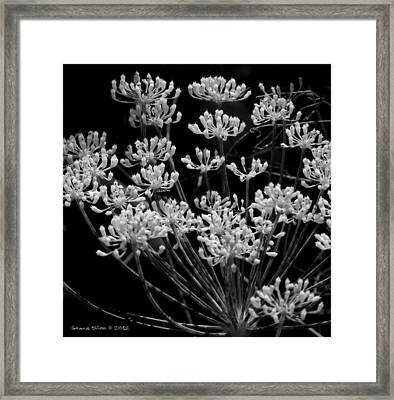 Fennel Flowers Framed Print by Grace Dillon