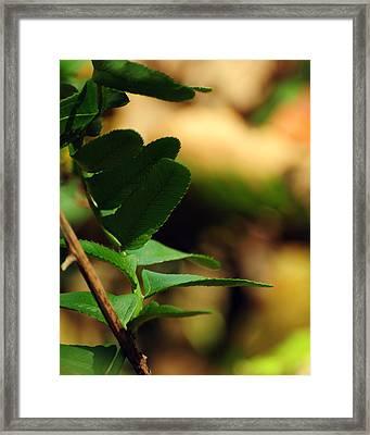 Fern Curve Framed Print by Rebecca Sherman