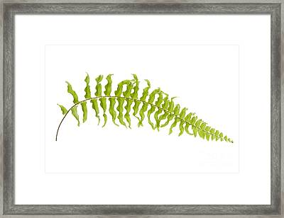Fern Leaf Framed Print by Atiketta Sangasaeng
