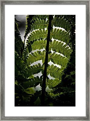 Fern Framed Print by Odd Jeppesen