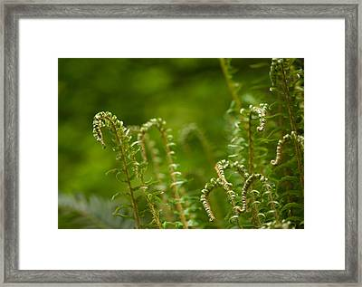 Ferns Fiddleheads Framed Print by Mike Reid