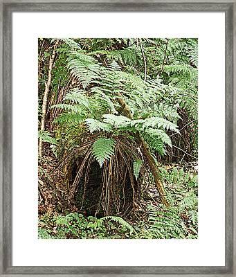 Ferns Forest  Framed Print by Tammy Ishmael - Eizman