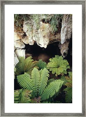 Ferns Growing In The Gaping Mouth Framed Print by Jason Edwards