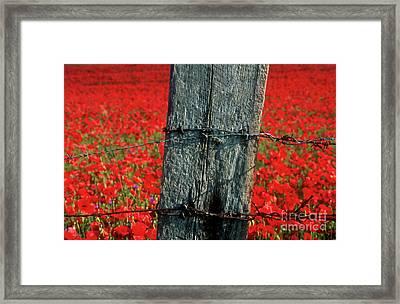 Field Of Poppies With A Wooden Post. Framed Print by Bernard Jaubert