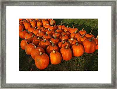 Field Of Pumpkins Framed Print by LeeAnn McLaneGoetz McLaneGoetzStudioLLCcom