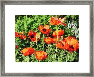 Field Of Red Poppies Framed Print by Susan Savad