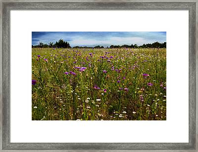 Field Of Thistles Framed Print by Tamyra Ayles
