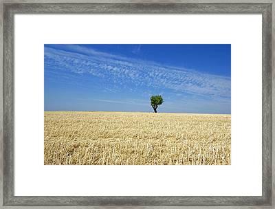 Field Of Wheat In Provence Framed Print by Bernard Jaubert