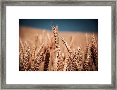 Field Framed Print by Pavel Tsvetkov