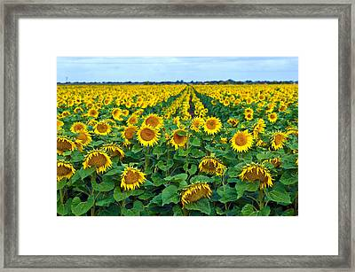 Field With Sunflowers In France Framed Print by Www.bluemoonfotografie.nl