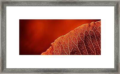 Fifty Shades Of Red Framed Print by John Hamlon