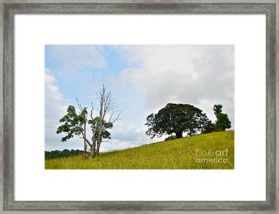 Fig Tree On A Hill Framed Print by Kaye Menner