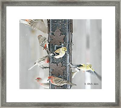 Finches Framed Print by Debbie Sikes