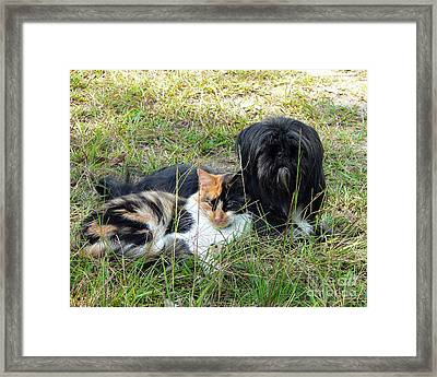 Fine Friends Framed Print by Al Powell Photography USA