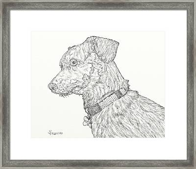 Finn In Black And White Framed Print by Salvadore Delvisco