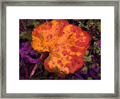 First Sign Of Autumn Framed Print by Gordon H Rohrbaugh Jr