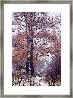 First Snow. Winter Coming Framed Print by Jenny Rainbow