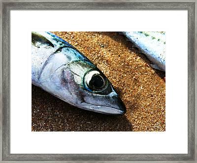 Fish Framed Print by Daniel Kulinski