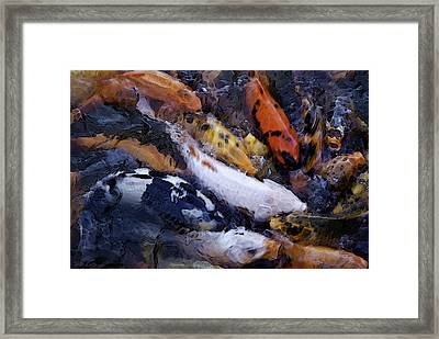 Fish Frenzy Framed Print by Justin  Curry