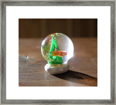 Fish Globe Framed Print by Wendy McKennon