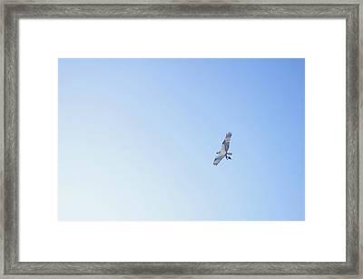 Fisher Eagle In Flight Framed Print by Fabian Jurado's Photography.