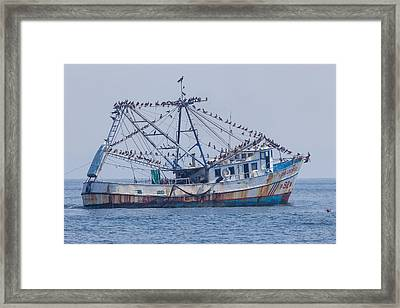 Fishing Boat With Birds Framed Print by Craig Lapsley
