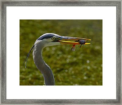 Fishing For A Living Framed Print by Tony Beck