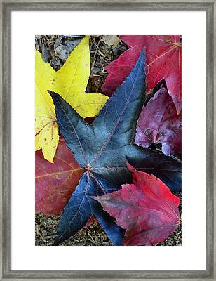 Five Fall Leaves Framed Print by Sandi OReilly