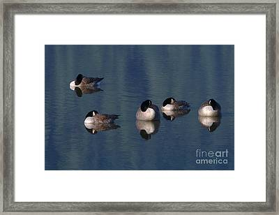 Five Geese Napping Framed Print by Sharon Talson