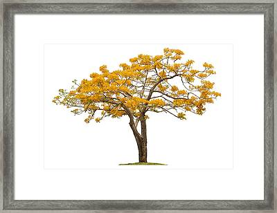 Flam Of The Forest Framed Print by Atiketta Sangasaeng