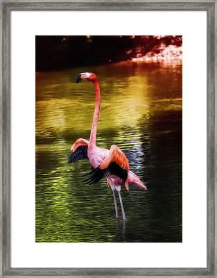 Flamingo Flow Framed Print by Bill Tiepelman