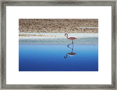 Flamingo Framed Print by MaCnuel
