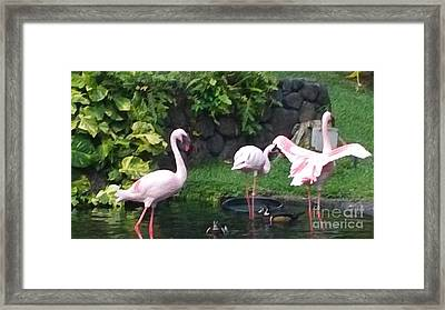 Flamingo Party Framed Print by Silvie Kendall