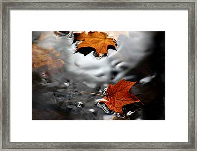 Floating Maple Leaves Framed Print by LeeAnn McLaneGoetz McLaneGoetzStudioLLCcom