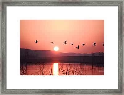 Flock Of Canada Geese Flying Framed Print by Ira Block