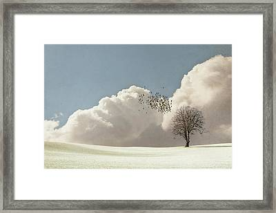 Flock Of Starlings Flying Framed Print by Image by J. Parsons