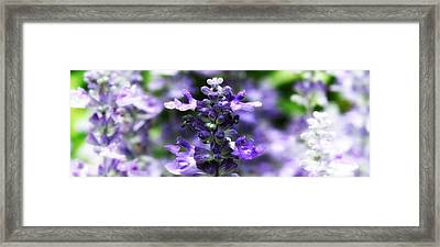 Flora Framed Print by Photography Art