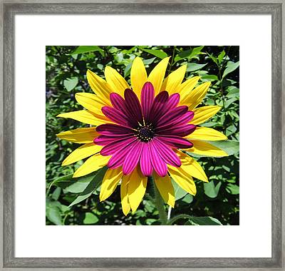 Floral Fusion Framed Print by Eric Kempson