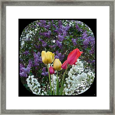 Floral Profusion Framed Print by Will Borden